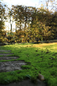 jardin ecole Montessori suresnes