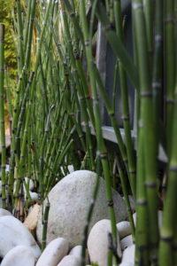 Bambou Ecole de l'Optimisme Suresnes